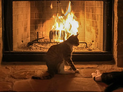 20161209_190713 (bullcreek) Tags: cats fireplace warmth cozy winter
