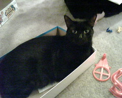 The cat in a mouse trap box.. (UKD) Tags: cat live jinx