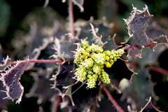Winter Wonder Land (Nele en Jan) Tags: winter belgium belgie bevroren tuin ijs vrieskou overpelt