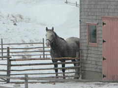 Promesse à ma nièce (nadiableue) Tags: pink horse snow fence cheval grey farm valentine