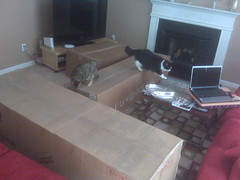 Maggie and Josie exploring the boxes