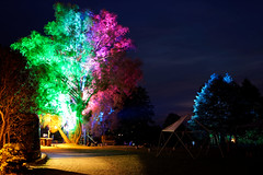 cccamp2015 (cosmoflash) Tags: light camp color colour tree night licht chaos nacht communication farbe baum cccamp2015