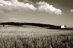 Mountain farm (Huoshan95) Tags: sunset mountain field clouds forest landscape atardecer blackwhite farm feld bosque cielo nubes campo montaa wald champ granja montaigne blanconegro cerdaa cerdagne blancnoire
