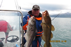 "Phil Marshall with Cod and Coalfish • <a style=""font-size:0.8em;"" href=""http://www.flickr.com/photos/113772263@N05/21221694199/"" target=""_blank"">View on Flickr</a>"