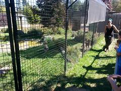 20150919_114536 (mjfmjfmjf) Tags: oregon zoo 2015 greatcatsworldpark