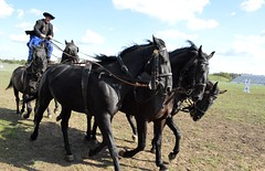 2015_Hortobgy_0385 (emzepe) Tags: show park horses horse caballo cheval hungary post great horsemen national brave plain ludwig herd pferd ungarn stud steppe stunt hungarian koch lovas horseman bla 2015 l hongrie puszta sz szeptember nemzeti mta alfld bemutat hortobgy hortobgyi gyes csiks mnes lnrd nagyalfld ts mtai csiksposta