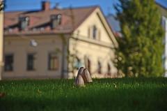 Sensommar (saabrobz) Tags: sweden karlstad sverige värmland wermland carlstad