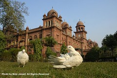 A view of University of the Punjab, Lahore- Bilal Javaid