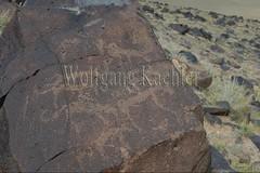 30095305 (wolfgangkaehler) Tags: old animal animals rock asian ancient asia desert mongolia centralasia petroglyph gobi blackmountains petroglyphs ibex mongolian gobidesert southernmongolia