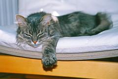 034_31A (d_fust) Tags: cat kitten gato katze  macska gatto fust kedi  anak katt gatito kissa ktzchen gattino kucing   katje     yavrusu