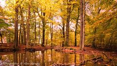 Autumn colors - Hierdense beek ... (Alex Verweij) Tags: autumn water beek herfst bos kleur hierden hierdensebeek