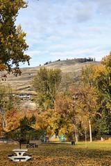Okanagan Autumn (tonywild241) Tags: park autumn mountain canada tree nature landscape britishcolumbia fallcolors hill foliage foothill mostviewed okanaganbc