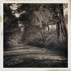 Autumn Colours (Thdenz) Tags: