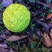 Bodark --- Strange Fruit
