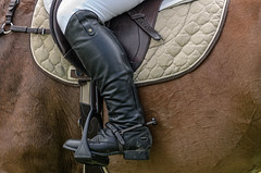 20151101_DSC9788.jpg (dave.fergy) Tags: show newzealand horse abstract animals boot clothing mood events clothes event ap nz wellington mammals apshow clareville on1pics