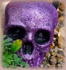 (milomingo) Tags: glitter wisconsin dayofthedead skeleton skull colorful purple bright display celebration mexican milwaukee festivity domes bold eldiadelosmuertos thedomes mitchellparkconservatory