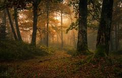 Dun Dubh IV (GenerationX) Tags: autumn trees mist leaves landscape scotland unitedkingdom scottish neil gb prints trossachs spiderwebs barr aberfoyle thenarrows lochard queenelizabethforestpark achrayforest canon6d laraich dondubh