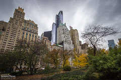 Essex House Roost (Jeremy P Perez) Tags: autumn newyork birds architecture skyscrapers centralpark manhattan essexhouse trumpparc hampshirehouse