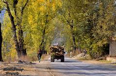 Autumn in Battagram (Shehzaad Maroof Khan) Tags: road travel autumn trees pakistan colors nikon highway walk karakoram kkh ontheroad kpk battagram khyberpakhtunkhwa