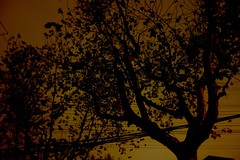 Dreariness of A Drizzling Day (elsa5566) Tags: trees sky night chinese parasol
