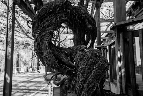 Old vines 1, Mark West Lodge
