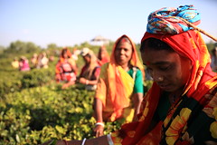 C1_2016-161388 (HamimCHOWDHURY  [Read my profile before you fol) Tags: teagardenportrait girlnature tealeaf workingwomen