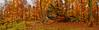 Jurassic trails - Suliszowice 🍂 (ChemiQ81) Tags: jura jurassic jurajskim szlakiem trails polska poland polen polish polsko chemiq польша poljska polonia lengyelországban польща polanya polija lenkija ポーランド pólland pholainn פולין πολωνία pologne puola poola pollando 波兰 полша польшча jesień autumn podzim las forest wald les outdoor ostrężnik wapień wapienne limestone bukowy buk beech vápenec rock skała 2016 serene ostaniec suliszowice żarki salonpolski