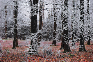 Yet another Frost......