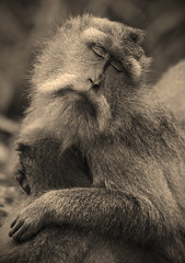 Bliss Monkey (Sepia)