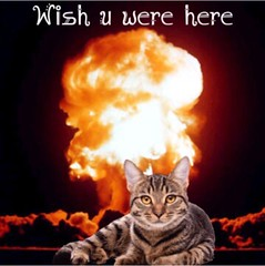 #cat #postcard #atombomb  #art #artistic #artsy #beautiful #mushroomcloud #indieart #psychedelic #psychedelicart #trippy #trippyart #digitalart #creative #creativity #daring #different #darkhumor (muchlove2016) Tags: cat postcard atombomb art artistic artsy beautiful mushroomcloud indieart psychedelic psychedelicart trippy trippyart digitalart creative creativity daring different darkhumor