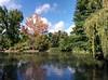 IMG_20150912_155555 (BG_Girl) Tags: софия врана sofia vrana дърво дървета езерце небе облак облаци плачеща върба tree trees pond sky cloud clouds weeping willow