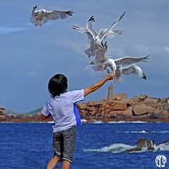 The last shot (mostodol) Tags: goëlands birds oiseaux seagull seagulls water eau mer sea bleu blue granitrose tregastel homme man brittany breizh bzh france côtesdarmor fuji fujifilm xa1 wow