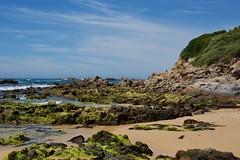 Green corner (jack eastlake) Tags: mystery bay far south coast nsw narooma rocky headland tourists holidays swimming swim