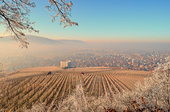 Frozen Wonderland (DrQ_Emilian) Tags: cold ice white frozen winter nature view fog foggy trees branches vineyards town hill above light outdoor