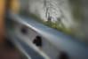 Green spot. (Dikke Biggie.) Tags: happyfencedfriday hff fence fenced fencing fencedfriday hek hekwerk friday vrijdag green groen greenspot groenplekje 52in2017 13green nut nuts moer moeren rust rusty roest roestig closeup detail macro dof depthoffield scherptediepte canon canoneos450d 100mm f28 dgawc canonnl moss mos