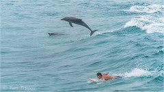 Dolphins & surfer (Yuris.photos) Tags: australia queensland sea seascape dolphin surfer maninthesea manwithananimal ocean ccoolangatta fingalheads