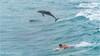 Dolphins & surfer (Yuris.photos) Tags: australia queensland sea seascape dolphin surfer maninthesea manwithananimal ocean ccoolangatta fingalheads