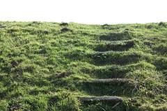 step through the grass (RobertsNL) Tags: 7daysofshooting week33 steppingout texturetuesday
