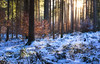 Winter Dream (@hipydeus) Tags: forest winter light germany colors landscape nature snow