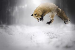 Hunt!