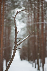 Winter @Garciems Latvia (jagerflick) Tags: helios helios442 58mm garciems helios44 f2 winter latvia tree forest branch bokeh swirly lemons