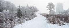 Foggy and Frosty Morning, St Albert, Alberta (WherezJeff) Tags: alberta canada stalbert weatherandseasons winter fog urban ca hoarfrost frost path snow