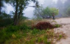 Walking through the web (kud4ipad) Tags: 2016 morning bank cobweb web mist fog tree bokeh dnieper legacy