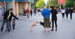 Знакомство (akk_rus) Tags: 3570 28 nikkor nikkor357028 nikon d800 nikond800 pet pets dog dogs пёс собака nature animals streetdogs straydogs romania roumanie румыния brasov брашов europe европа braşov