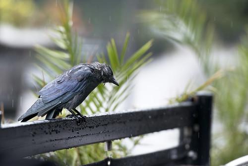 Kaja i regn