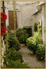 -    Macetas  (jose luis naussa ( + 1,8 k w. )) Tags: flores rincones alpujarras  pampaneira  saariysqualitypicturesgallery