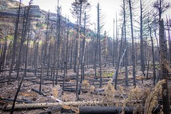 After recent forest fires, green shoots are already popping up.