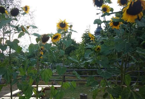 Осенняя замена солнцу #хоббитаниякаконаесть #свежийвоздух