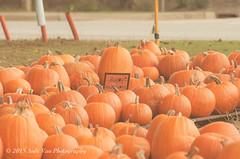 Pallets of Pumpkins (AndiVanPhotog) Tags: orange fall halloween big little pumpkins scarecrow harvest inbetween balesofhay seaoforange douglasvillega pumpkinpatch2015 shepherdofthehillsumc