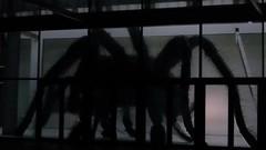 Spider Projection V.2